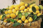 basket of lemons